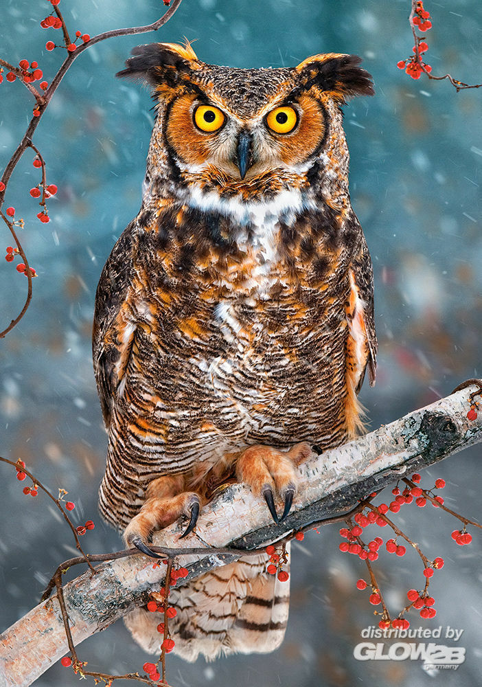 Castorland B-52387 Great Horned Owl, Puzzle 500 Teile